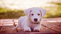 Cute puppies Wallpaper 33