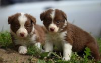 Cute puppies Wallpaper 50