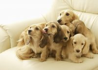 Cute puppies Wallpaper 49