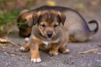 Cute puppies Wallpaper 48