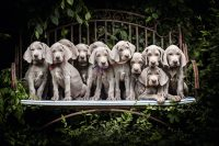Cute puppies Wallpaper 45