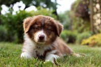 Cute puppies Wallpaper 31