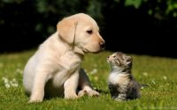 Cute puppies Wallpaper 42
