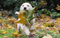 Cute puppies Wallpaper 39