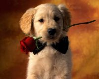 Cute puppies Wallpaper 37