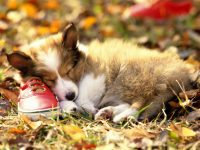 Cute puppies Wallpaper 29