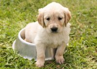 Cute puppies Wallpaper 28