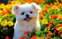 Cute puppies Wallpaper 26