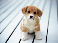 Cute puppies Wallpaper 25