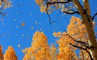 Fall Desktop Wallpaper 44