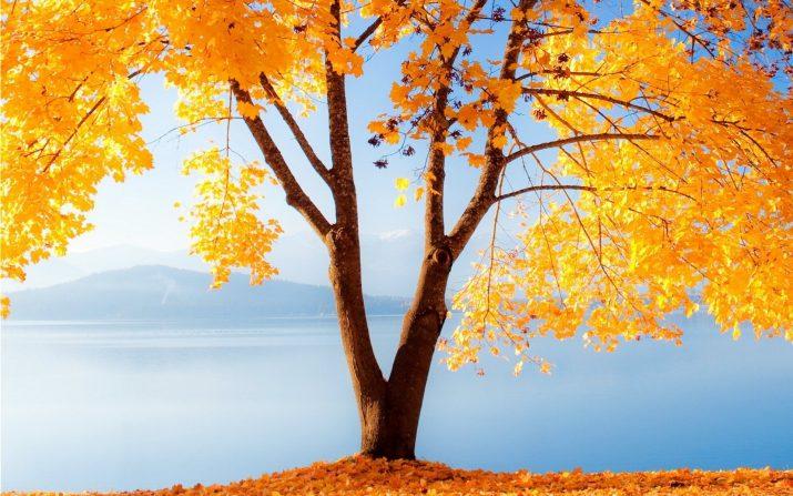 Fall Desktop Wallpaper 1
