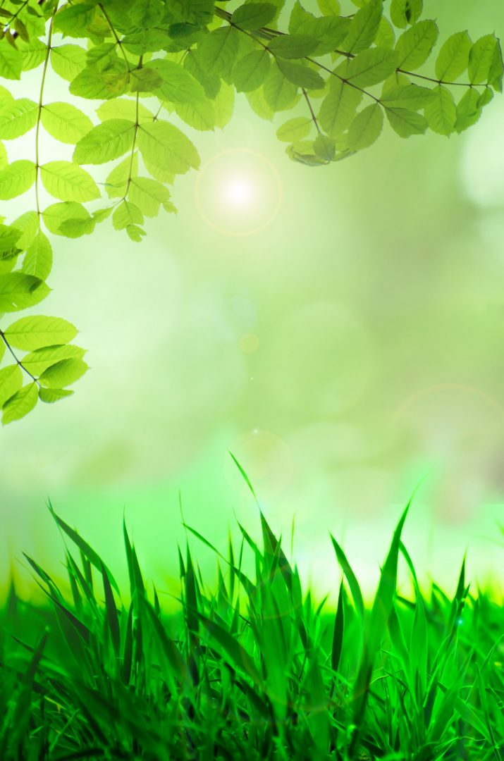 Green Wallpaper 1