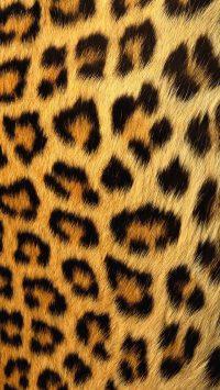 Cheetah Print Wallpaper 39