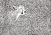 Cheetah Print Wallpaper 38