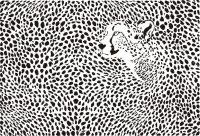 Cheetah Print Wallpaper 37
