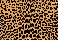 Cheetah Print Wallpaper 34
