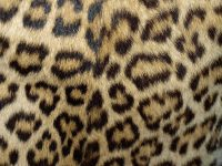 Cheetah Print Wallpaper 31