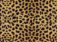 Cheetah Print Wallpaper 27