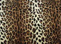 Cheetah Print Wallpaper 21