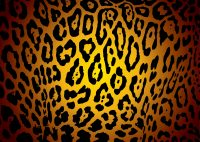 Cheetah Print Wallpaper 14