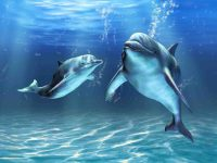 Dolphin wallpaper 18