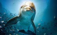 Dolphin Wallpaper 8
