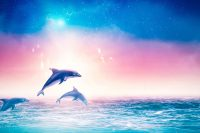 Dolphin Wallpaper 7