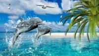 Dolphin Wallpaper 15