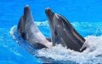Dolphin Wallpaper 13