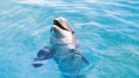 Dolphin Wallpaper 12