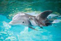 Dolphin Wallpaper 11