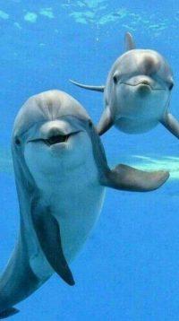 Dolphin Wallpaper 10