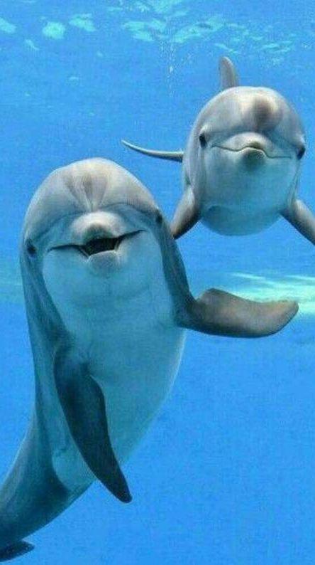 Dolphin Wallpaper 1