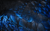 Ravenclaw Wallpaper 11
