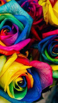 Roses Wallpaper 41