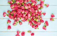 Roses Wallpaper 40