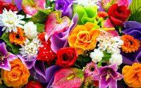 Roses Wallpaper 28