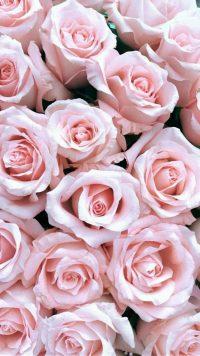 Roses Wallpaper 48