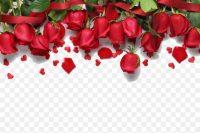 Roses Wallpaper 46