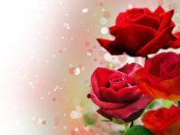 Roses Wallpaper 42