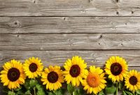 Sunflower Wallpaper 12