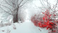 Winter Desktop Wallpaper 4
