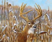 Deer Mullet Wallpaper 13