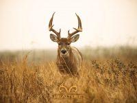 Deer Mullet Wallpaper 11