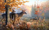 Deer Mullet wallpaper 15