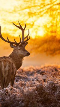 Deer Mullet Wallpaper 5