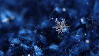 Snowflake Wallpaper 16