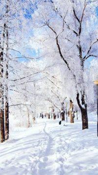 Winter Wallpaper 27