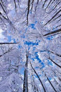 Winter Wallpaper 4