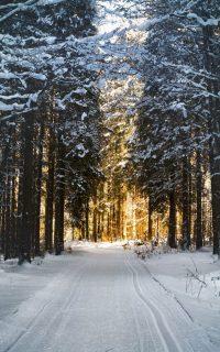 Winter Wallpaper 5